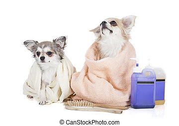 Wash the dogs on a white background in studio