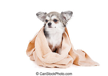 Wash the dog on a white background in studio