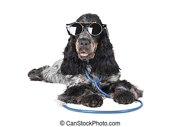 dog with a phonendoscope and glasses on a white background...