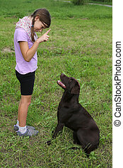 Girl trains a dog on a meadow - Little girl trains a dog on...