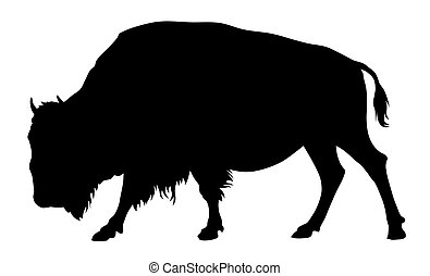 Buffalo - Vector illustration of buffalo silhouette