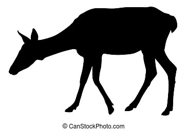 Roe - Vector illustration of roe silhouette