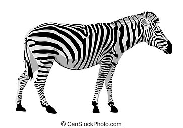 Zebra - Abstract vector illustration of zebra