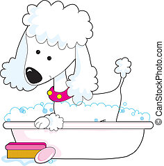 Poodle Bath - A cute poodle is getting a bath