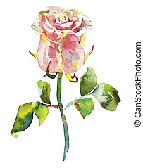 pink watercolor rose - hand draw ornate pink watercolor rose...