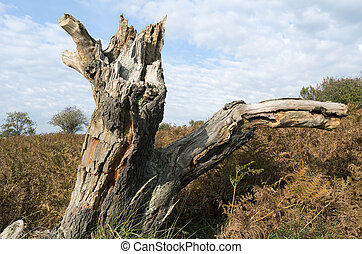 Tree stump in a dune landscape - Tree stump in a dune...