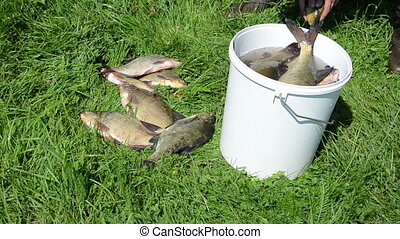 large fish bucket