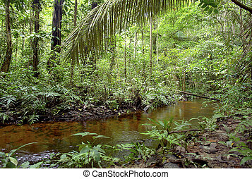 Amazon vegetation and water stream - Amazon vegetation and...