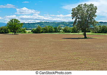 Plowed Fields - The Italian Farmhouses Surrounded by Forests...
