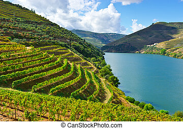 Terrace - Vineyards in the Valley of the River Douro,...