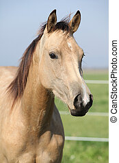 Nice palomino horse looking at you in autumn