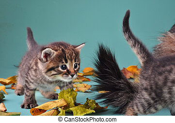 group of small kittens in autumn leaves - Autumn group...
