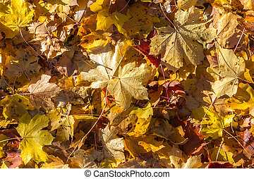 Colorful autumn leaves in park