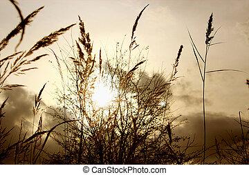Polne trawy w zachodzacym sloncu - Polne trawy na tle...
