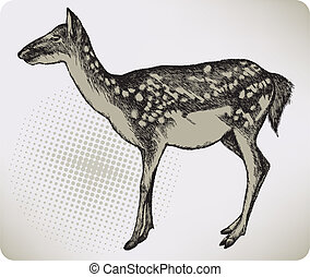 Dappled deer, hand-drawing Vector illustration