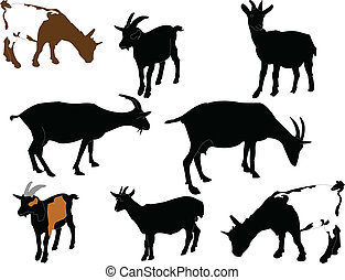 goats collection - vector