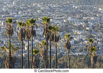 Hollywood Hillside Palms - Hillside palm trees high above...