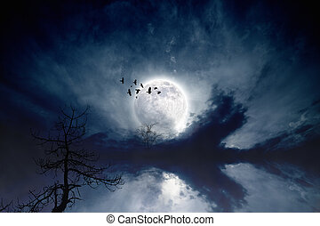 Full moon - Night sky with full moon, flock of flying...
