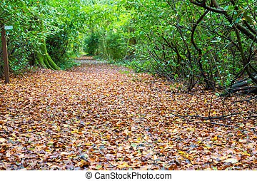 Foot path covered with leaves - Foot path in a forest...