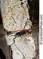 concrete post and barbed wire - Old post supporting barbed...