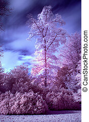 Stunning false color infrared forest landscape image -...