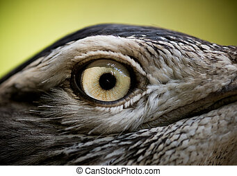 Bird eye - Close-up of a Bird eye