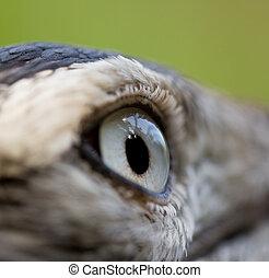 Bird eye - Close-up of a Bird eye