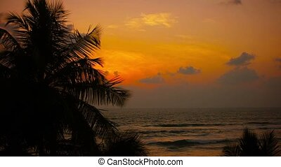 Tropical coast at sunset. Palm trees swaying in the wind
