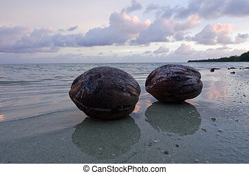 Coconuts on Aitutaki Lagoon Cook Islands - Two coconuts on...