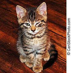 Winking Kitten                      - Winking Kitten