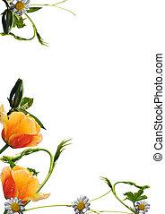 Fresh flower border - chamomile, chestnut, vine in the...