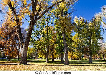 Fall Trees in City Park - Denver, Colorado