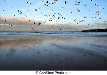 ballybunion seagulls - a flock of seagulls against a cloudy...
