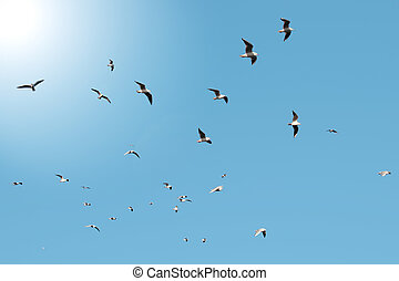 flocks of sea birds - a flock of seagulls against a blue sky