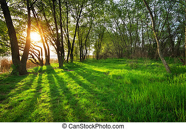 Sunset in forest Nature composition