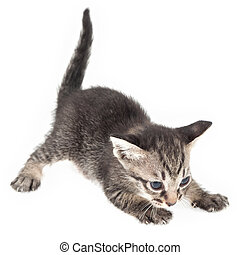 Kitten crouching on white background