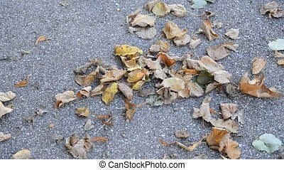 fallen leaves dancing