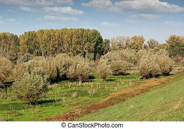 nature landscape forest autumn season