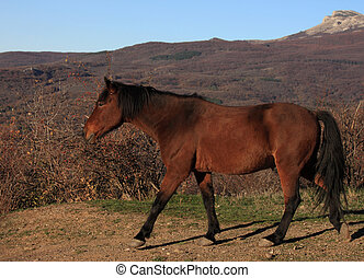 running horse - horse running by path in mountains