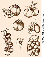Vintage tomatoes - Set of vector vintage hand drawn tomatoes