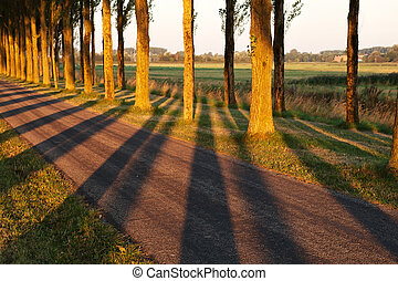 light and tree shadow pattern in morning sunlight on the...