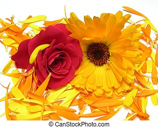 Calendula and rose flower on petals