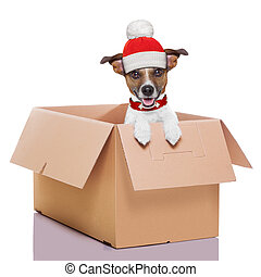 moving box winter dog - winter christmas mail dog in a very...