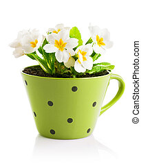 spring flowers with leaves in pot