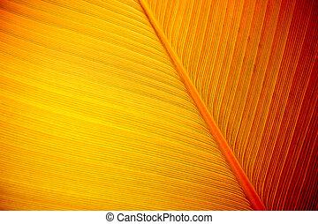 Large Leaf Background