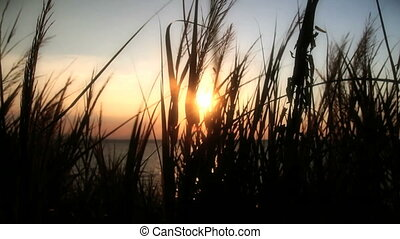 sunset sea grass