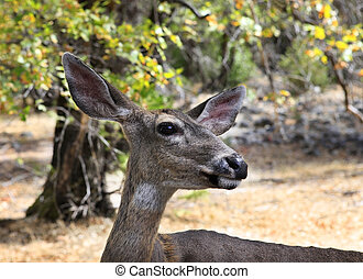 Doe, detailed portrait isolated on forest background...