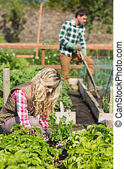 Young couple working in a garden while the sun is shining