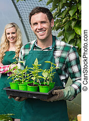 Young man showing carton of small plants in a green house...