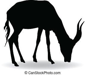 antelope  - silhouette of antelope vector illustration